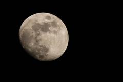 Mr Moon