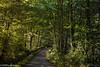 Woodland-Road