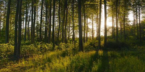 beautifullight beautyinnature naturallight gdansk forestphotography theforesttales shadows panoramic scenics scene tranquil nopeople nobody purelandscape woodland woods