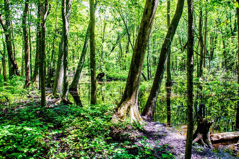 Wildwood Nature Preserve - July 5, 2017