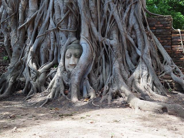 P6222656 ワット・マハータート(Wat Mahathat/วัดมหาธาตุ) アユタヤ タイ thailand 世界遺産