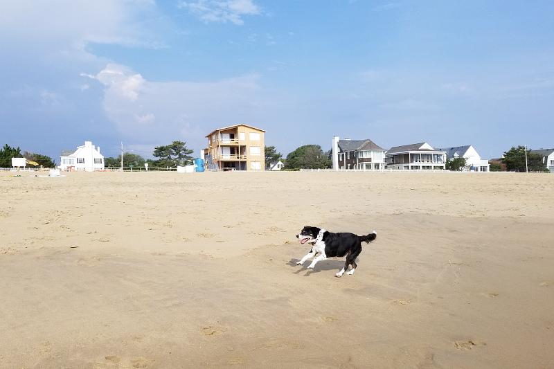dog-running-beach-12