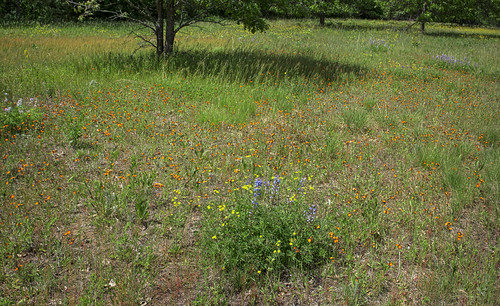 Karner Blue Meadow State Natural Area