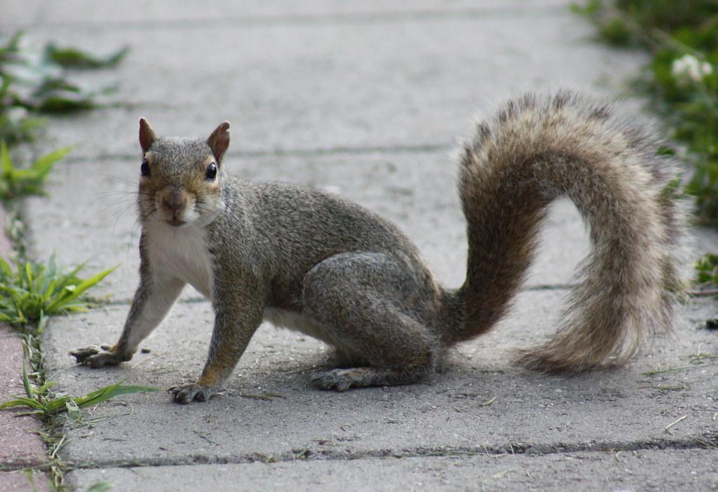 Squirrel Invasion