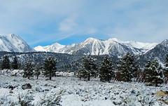 Pretty in White, Sierra Nevada Spring Snow 5-17