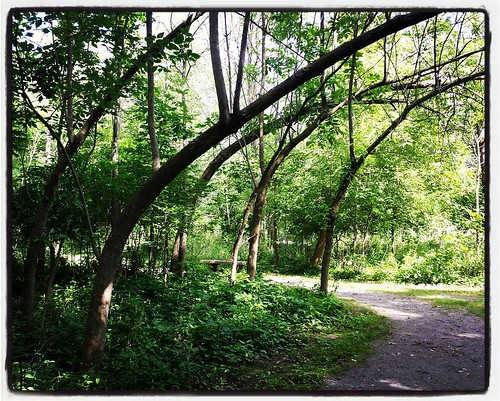 Never noticed this stand of bending trees before. #trees #burchfieldnaturecenter #westseneca #wny