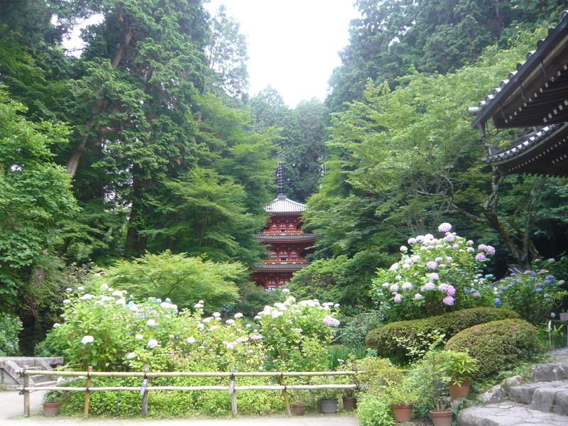 岩船寺の三重の塔と紫陽花 gansen-ji three-story stupa