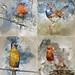 watercolor birds by martisimas