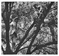 Radical BEF leader addresses followers from a tree: 1932