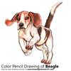 Beagle with Color Pencils [Time Lapse]