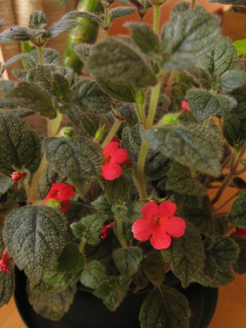 Autres plantes chez Cloo 35748596421_e29ab52989_o