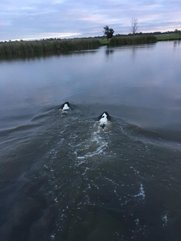 Swimming_zpsgdy6sxti