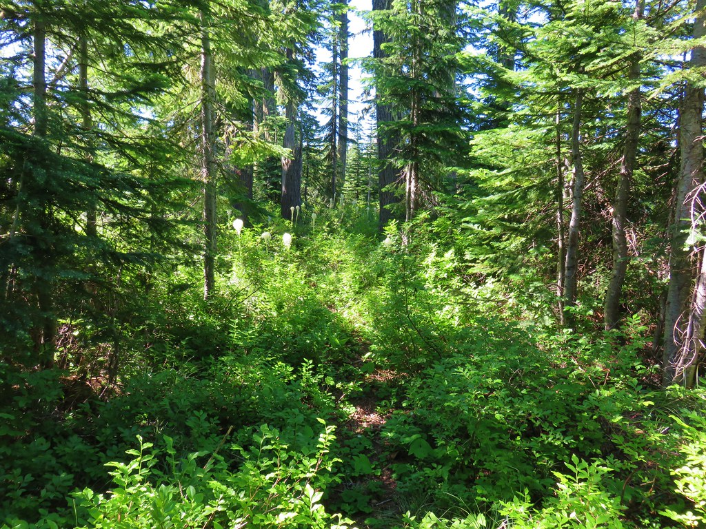 Rho Ridge Trail