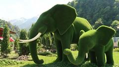 Уникальный парк зелёных фигур открыт в Красной Поляне