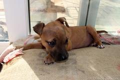 Foster Puppy Cuteness Overload