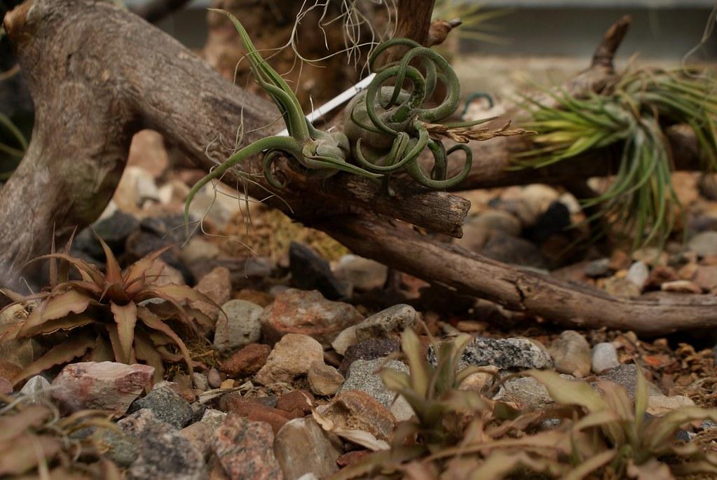 Serre des cactus et succulentes dans le jardin botanique de Riga en Lettonie.