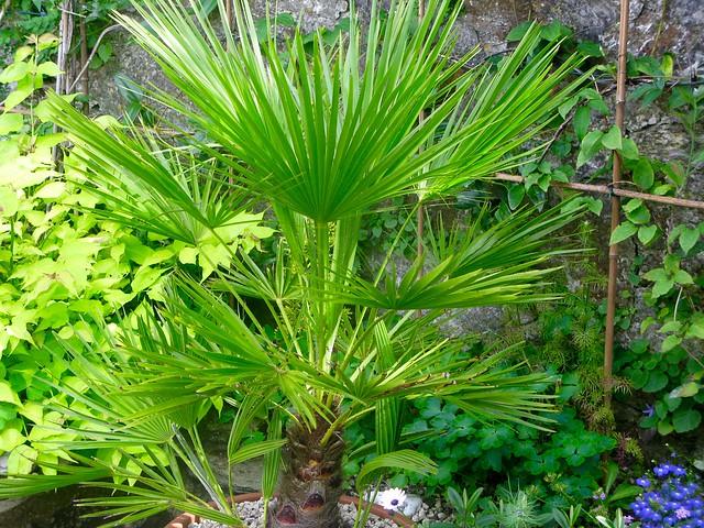 My palm tree is, Canon POWERSHOT G9