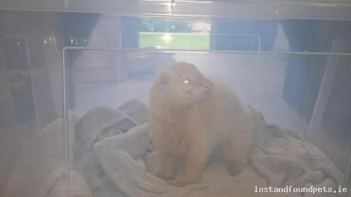 Tue, Jun 6th, 2017 Found Male Ferret - Tournant, Dunlavin, Wicklow