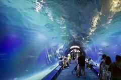 Oceanogràfic underwater