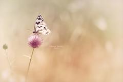 """""""Butterfly�s dream..."""""""
