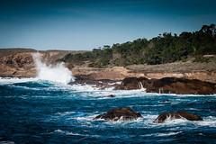 South Shore of Point Lobos (3)
