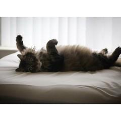 Cat Boudoir