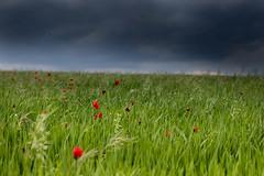 Primavera a la Segarra
