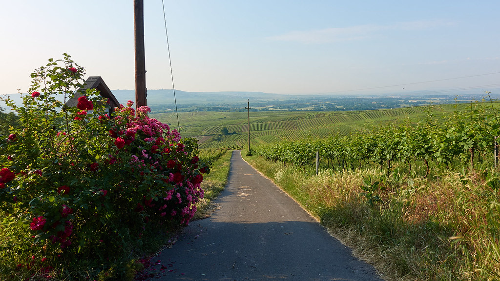 Wandern auf dem Rochusberg