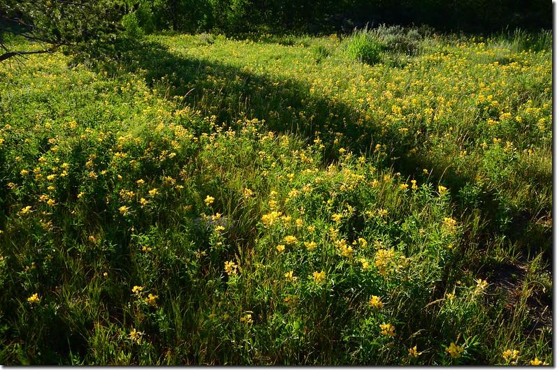 營地野花 1