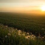 Sunrise - av Pics by Susie J
