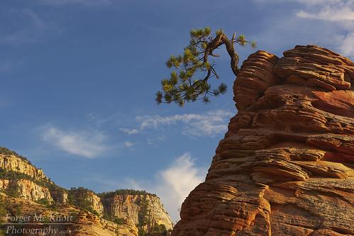 zionnationalpark utah desert zion butte tree bonsai bonsaitree zionbonsai zionbonsaitree clouds sunset sunrise cliffs plateau mesa sandstone rocks boulders