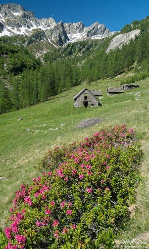 Lago Gelato, Alpe di Sfii (Sfille)