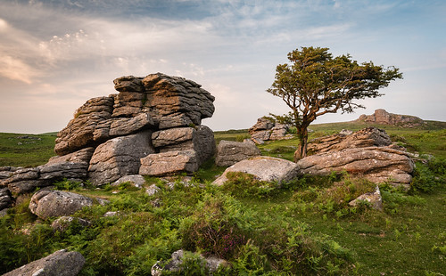 grass dartmoor moss landscape sunset nature circularpolariser tor outdoor emsworthy weather clouds devon southwest scene moor tree customcrop equipment crop hill nationalpark lightroomcc rocks wilderness filters adobelightroom circularpolarizer cloudy devonshire dusk evening filter grassy hillside leefilters lightroom polariser polarizer wood haytor england unitedkingdom gb