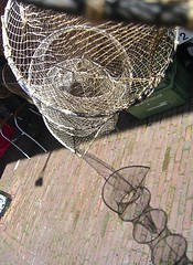 palin net and shadow