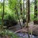 Purisima Creek 2017-06-25