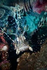 Plongée sous marine Similan