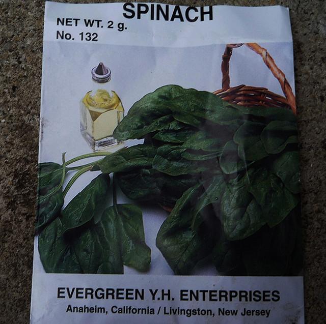 菠菜们短暂的一生和雌雄菠菜们的那些事