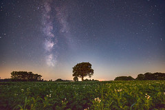 Starry sky over the potato field