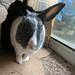 Happy birthday Oscar, you are the bunniest.