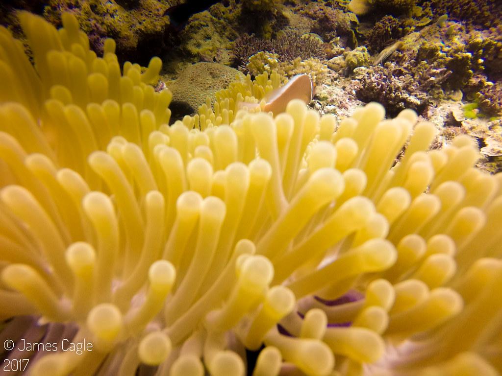 Great Barrier Reef - Australia-161