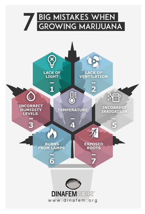 Errores al cultivar marihuana que debes evitar #infografía