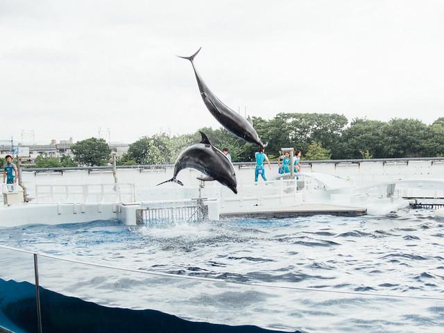 20170718_kyoto_aquarium-25