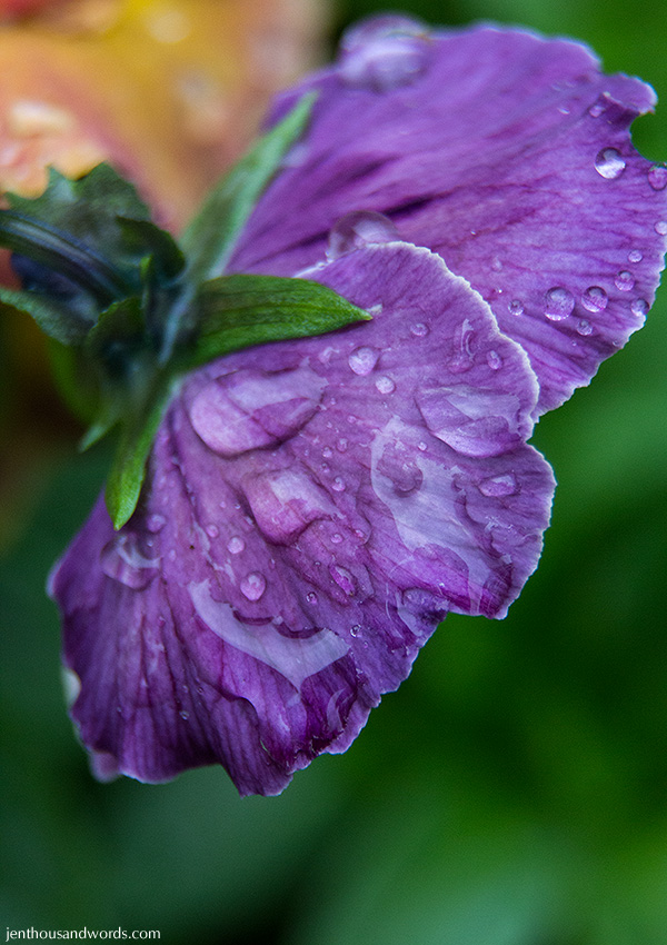 Flowers between showers 15