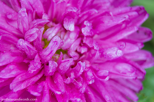 Flowers between showers 05