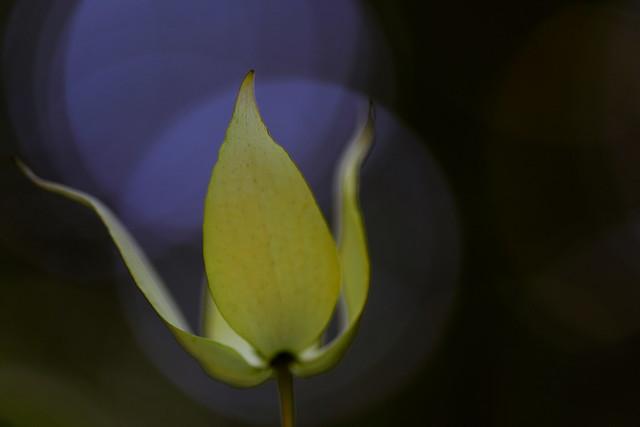 flower 1211