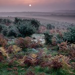 Heathland Colour