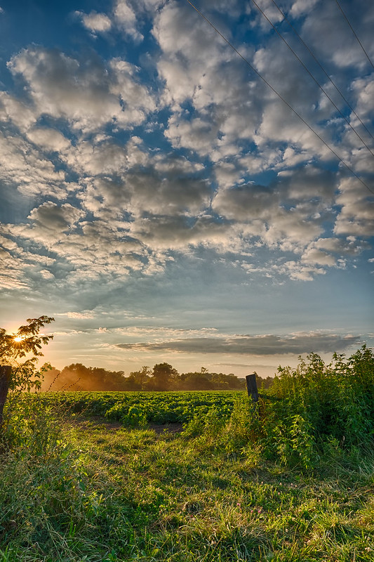 Amish Pastoral - 5448