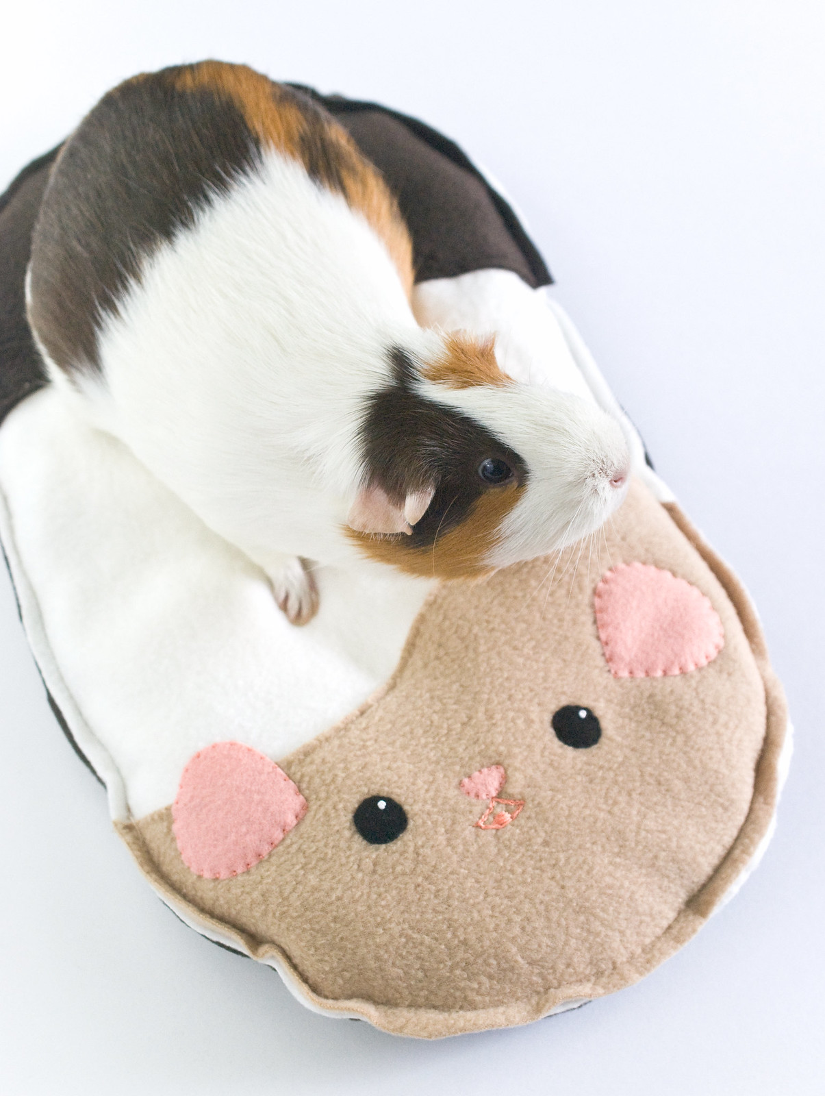 Guinea Pig Cushion