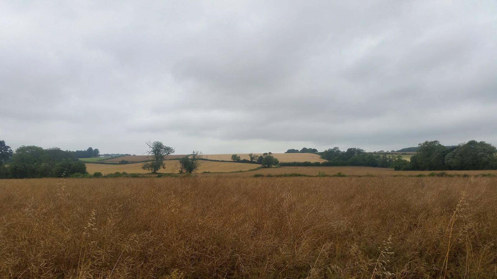10, View of Hobbitshire