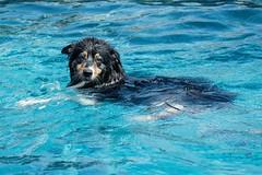 Roxy the Otter